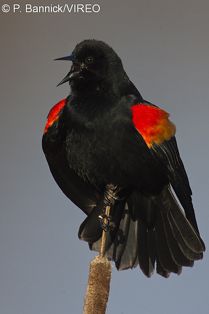 Philadelphia Birds -
